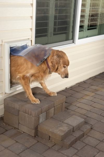 Photo of Dog Exiting a Pet Door