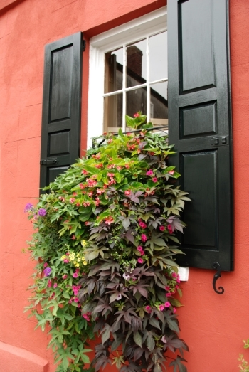 Window Boxes: Vines