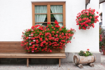 Big Window Boxes