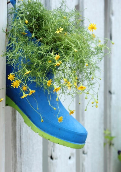 Plant Growing in a Colored Boot on a Wall