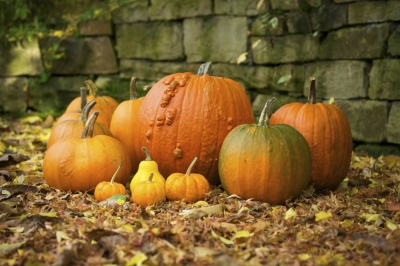 Seasonal Design Tips: Pumpkins