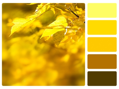 Yellow/Brown Color Palette Beside Autumn Leaves