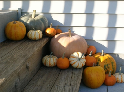Fall Decor: Pumpkins